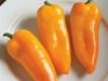 "Sweet yellow ""Italian fryer"" type. Medium size peppers"