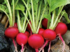 Radish-Cherry-Belle
