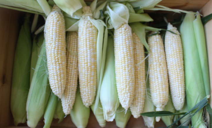 sweet corn
