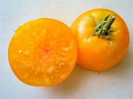 Rich old-time tomato flavor on productive plants.