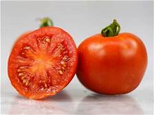 Beautiful, smooth, large red fruit is globe-shaped. With good disease resistance, great yields, perfect shape, and wonderful flavor. This variety was developed in Illinois & bred from heirloom varieties, it has fantastic taste!