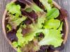 Gourmet-lettuce-Blend